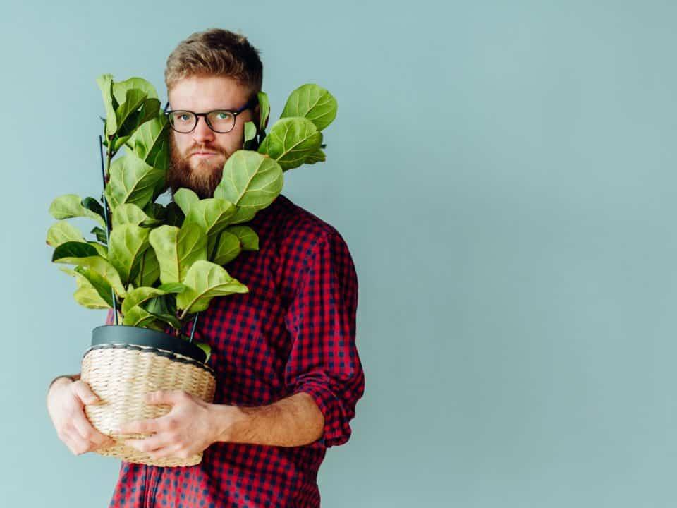 Que faire avec les plantes lors d'un déménagement ?